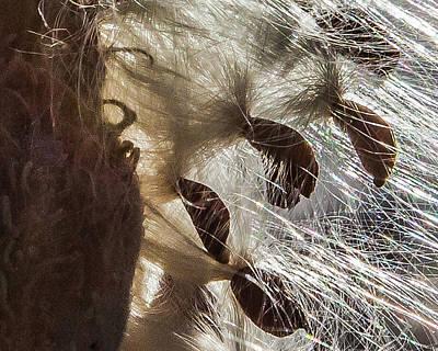 Milkweed Seed Burst Poster