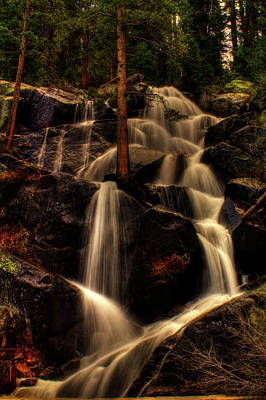Quaking Aspen Falls Along Tioga Pass  Poster
