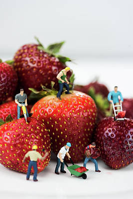 Miniature Construction Workers On Strawberries Poster