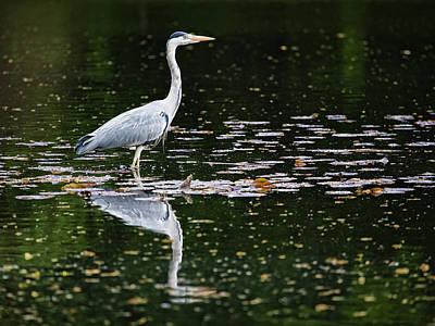 Mirrored Heron Poster