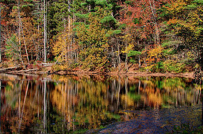 Mirrored Reflection On The Pond Poster by Jeff Folger