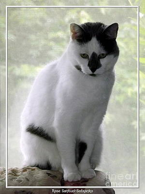 Poster featuring the photograph Miss Jerrie Cat With Watercolor Effect by Rose Santuci-Sofranko