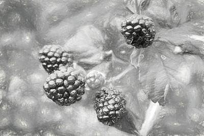 Mississippi Blackberries In Black And White Poster by JC Findley