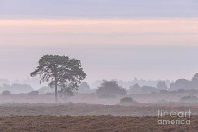 Mist Stripes New Forest Poster by Richard Thomas