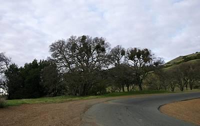 Mistletoe Oaks Poster