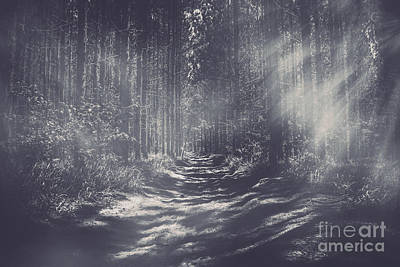 Misty Enchanted Pine Forest Poster by Jorgo Photography - Wall Art Gallery