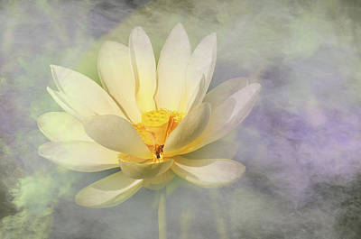 Misty Lotus Poster by Carolyn Dalessandro