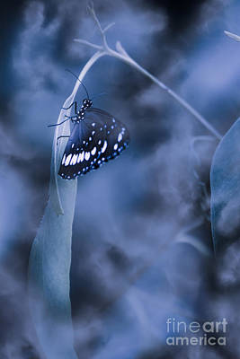 Misty Moonlight Butterfly In Blue Twilight Forest Poster by Jorgo Photography - Wall Art Gallery