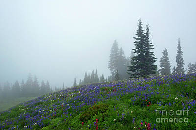 Misty Morning Meadow Poster by Mike Dawson