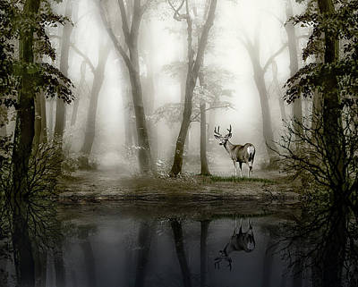 Misty Morning Reflections Poster