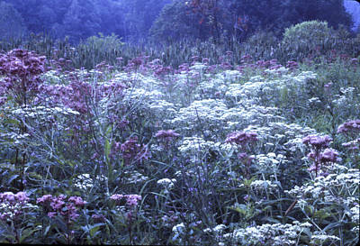 Misty Morning Wildflowers 3 Poster