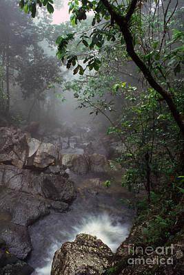 Misty Rainforest El Yunque Mirror Image Poster by Thomas R Fletcher