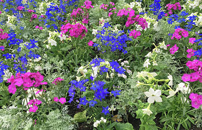 Mixed Flower Garden Poster by Aimee L Maher Photography and Art Visit ALMGallerydotcom