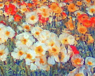 Mixed Poppies Poster