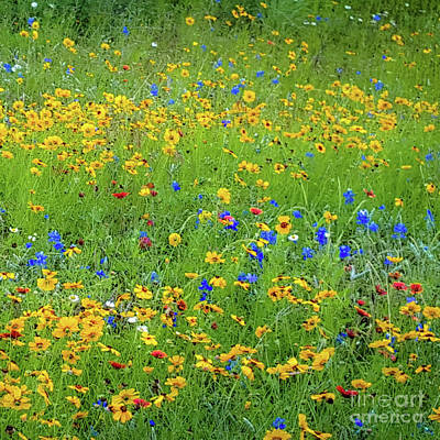 Poster featuring the photograph Mixed Wildflowers In Bloom 538 by D Davila