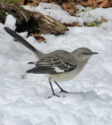 Mockingbird In The Snow Poster
