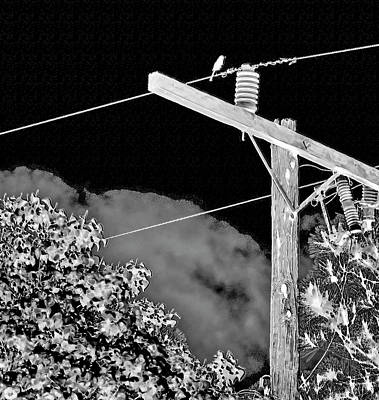 Mockingbird On A Wire Poster