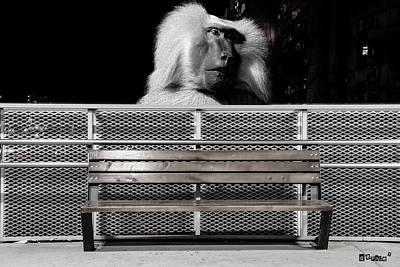 Baboon Watching Over Park Bench Poster by KJ DePace