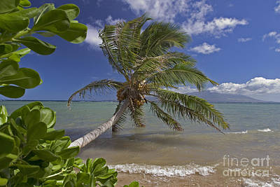 Molokai, Palm Tree Poster by Dave Fleetham - Printscapes
