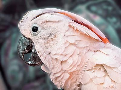 Moluccan Cockatoo Poster by Bob Slitzan