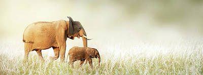 Mom And Baby Elephant Walking Through Tall Grass Poster by Susan Schmitz