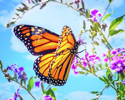 Monarch Butterfly And Blue Skies Poster