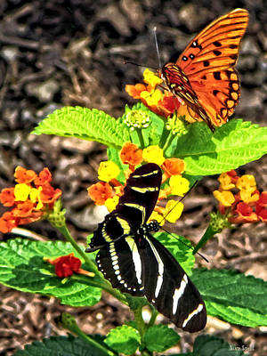 Monarch Butterfly And Zebra Butterfly Poster by Susan Savad