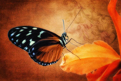 Monarch Butterfly On An Orchid Petal Poster