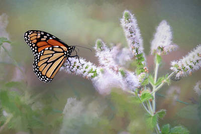 Poster featuring the photograph Monarch On Mint 1 by Lori Deiter
