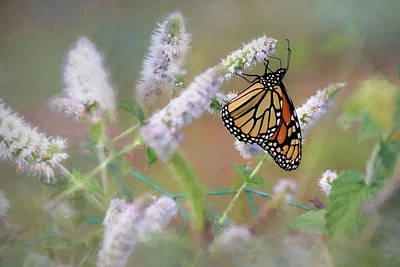 Poster featuring the photograph Monarch On Mint 2 by Lori Deiter