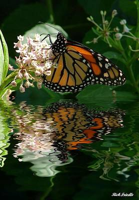 Monarch Reflection Poster by Rick Friedle