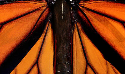 Monarch Wings Poster by Thomas Morris