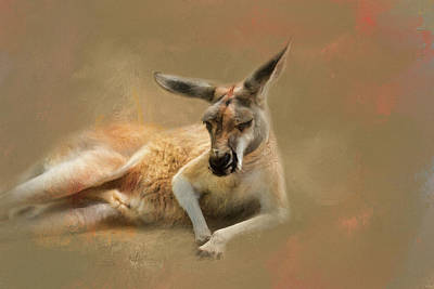 Monday Morning Drowsies Kangaroo Art Poster by Jai Johnson
