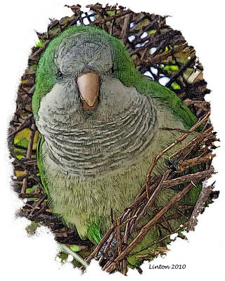 Monk Parakeet Poster by Larry Linton
