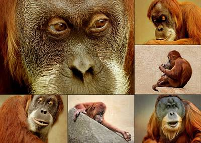 Monkey Collage Poster by Heike Hultsch