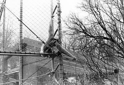 Monkey Grab  Poster