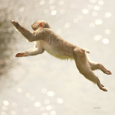 Poster featuring the photograph Monkey Jump by Roy  McPeak