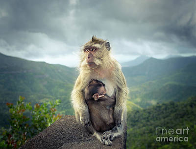 Monkeys At The Gorges Viewpoint. Mauritius.  Poster by MotHaiBaPhoto Prints