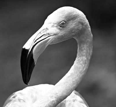 Monochrome Flamingo 2 Poster