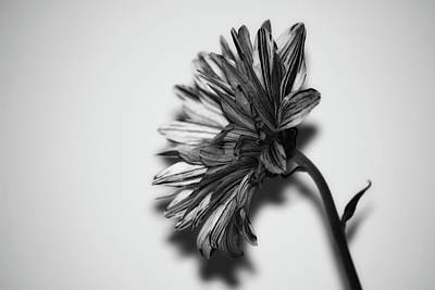 Monochrome Flower Poster by Martin Newman