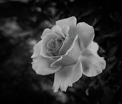 Monochrome Rose Macro Poster