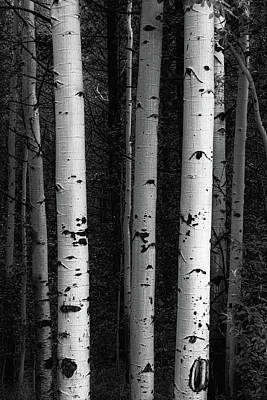Poster featuring the photograph Monochrome Wilderness Wonders by James BO Insogna