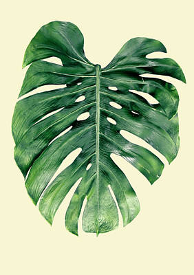 Monstera Deliciosa Poster by Rafael Farias