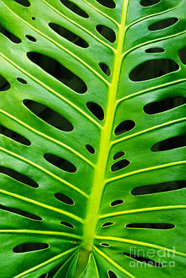 Monstera Leaf Poster by Carlos Caetano