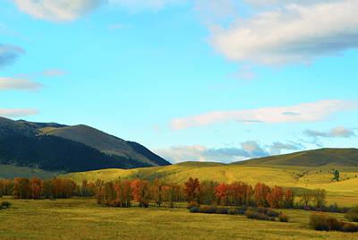 Montana Fall Trees Poster