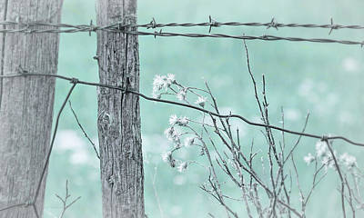 Montana Rustic Fence And Weeds Teal Poster by Jennie Marie Schell