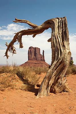 Monument Valley Desert Tree Poster