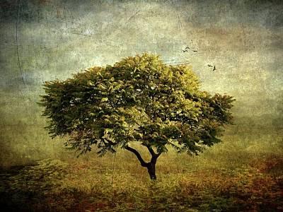 Moody Mimosa Poster