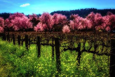 Moody Spring Vineyards Poster by Garry Gay