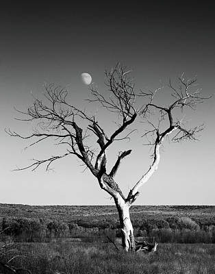 Moon And Memory At Bosque Del Apache N M Poster